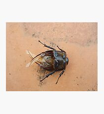 cockroach Photographic Print