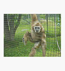 MONKEY AT THE ZOO Photographic Print