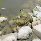 twin frogs by dianegreenwood
