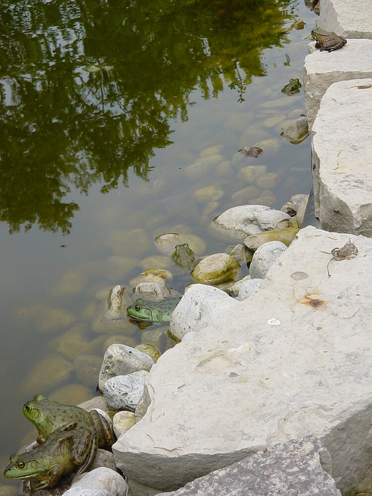 lots of frogs by dianegreenwood