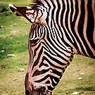 Zebra-Profil von gemlenz