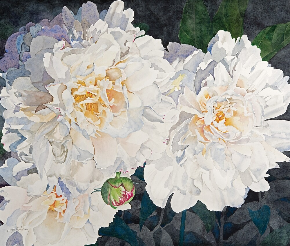 White Peonies Watercolor by Gayle Mahoney