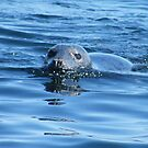 Seal Pup by pat oubridge