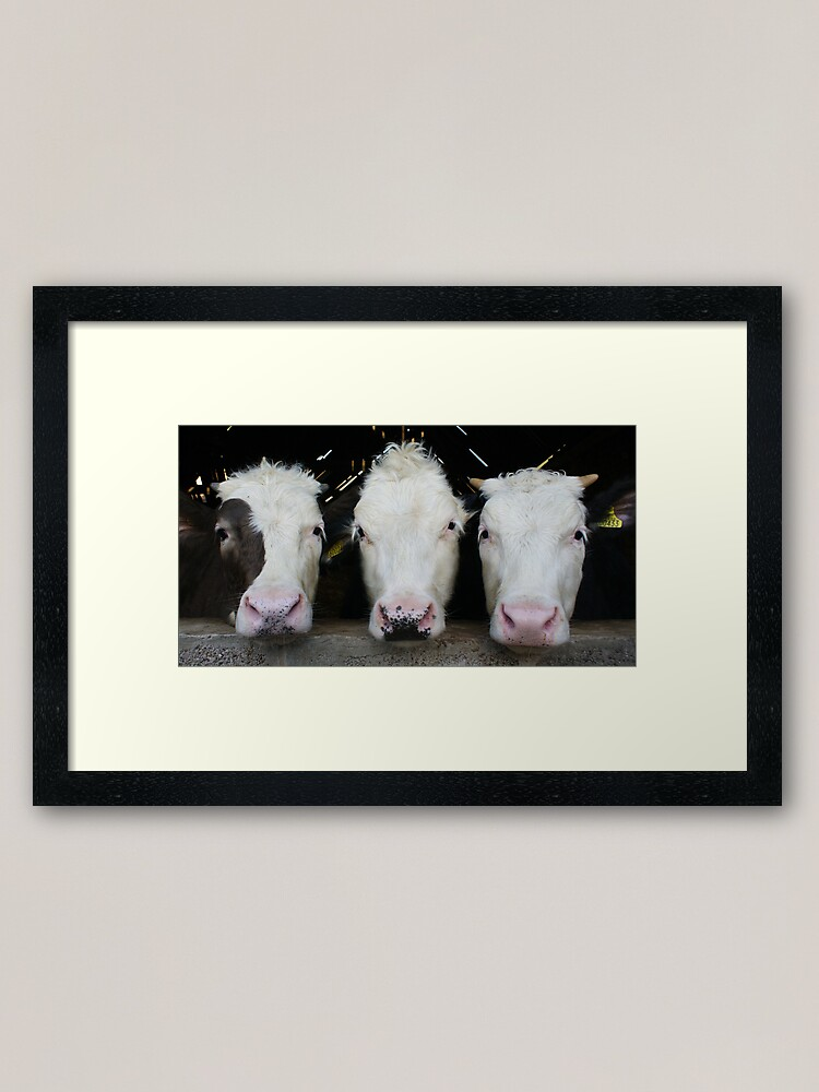 Alternate view of Three of a Kind Framed Art Print