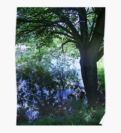 Tree on Pond Poster