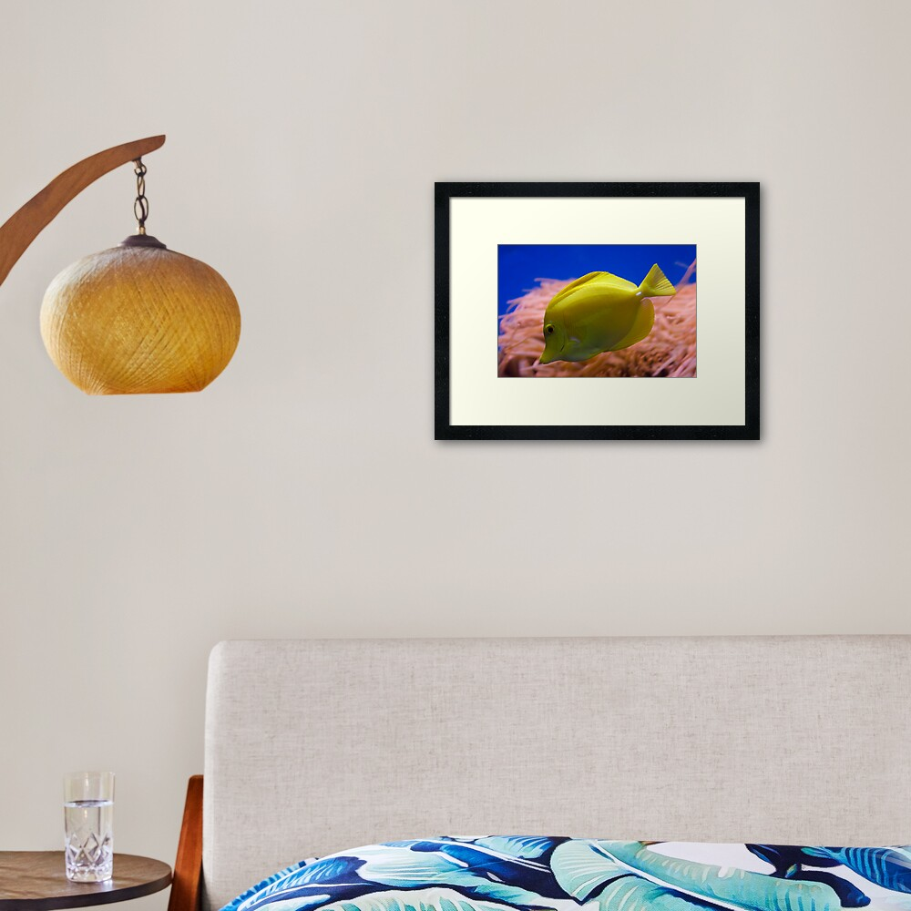 Yellow Tang Framed Art Print