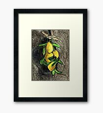Lemons On The Branch Framed Print