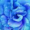 Best Colored Flower