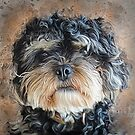 Ted The Cockapoo by Brian Tarr