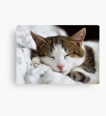 Sleeping Cat Canvas Print