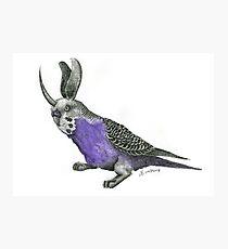 Bunny Budgie Photographic Print