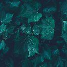 «Hiedra verde esmeralda oscura deja gotas de agua» de PLdesign