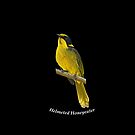 Helmeted Honeyeater 8 by quentinjlang