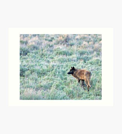 Lone Wolf, Lamar Valley of Yellowstone Art Print