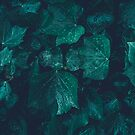 Dark emerald green ivy leaves water drops by PLdesign