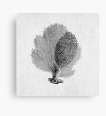 Sea Fan Coral Black and White Illustration Nautical Nature Decor Metal Print