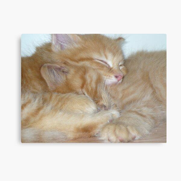 Kitten Hugs Metal Print