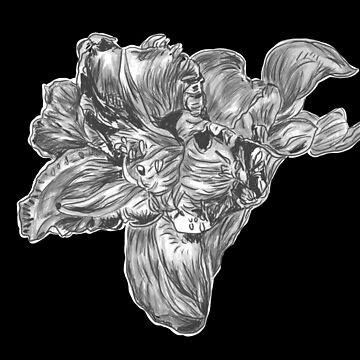 black and white drawing of a tulip by jackpoint23