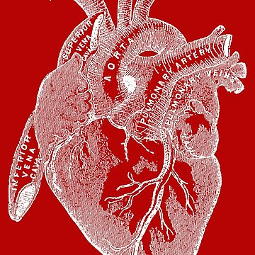 Antique Human Anatomy Heart by Pixelchicken