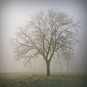 Misty Morning Tree by CaroT