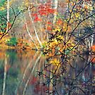 Litchfield Connecticut fall shot by milton ginos