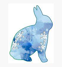 Bunny Blue Photographic Print