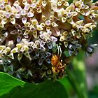 Crab Spider at Work by Catherine Sherman