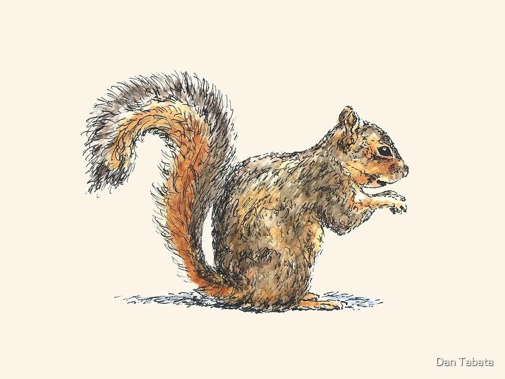 Sitting Squirrel by Dan Tabata