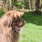 The Great Leonberger by CreativeEm