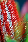 Banksia Abstract by Extraordinary Light