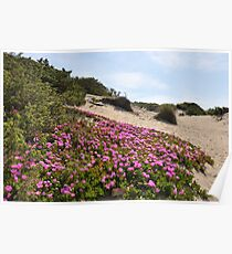 Circeo's sand dunes - National Park of Circeo - Latium - Italy Poster