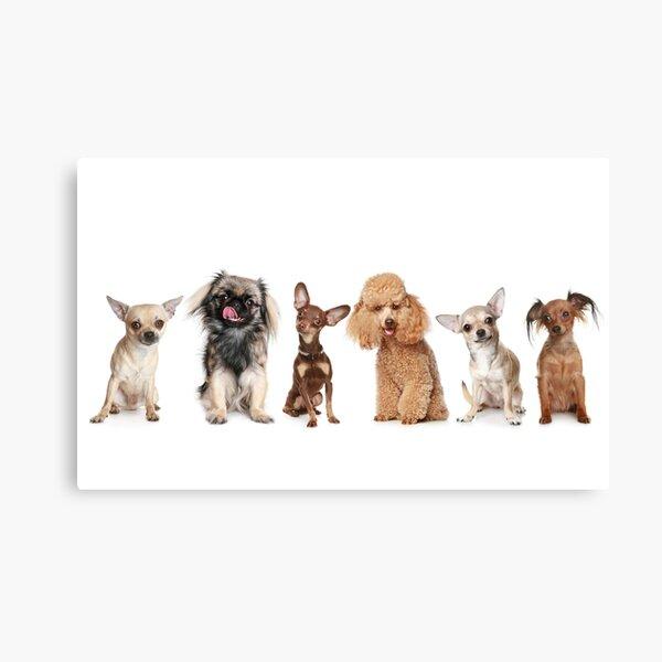 My Furry Friends Canvas Print