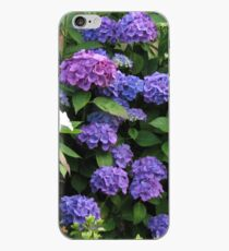 Blue Beauties - Hydrangea Blossoms iPhone-Hülle & Cover