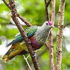 Rose Crowned Fruit Dove by TGrowden