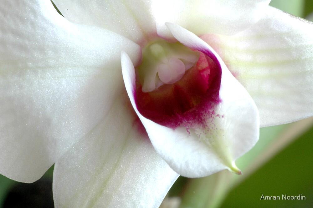 Orchid by Amran Noordin