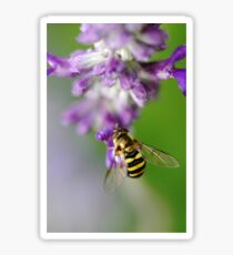 Little Hoverfly Sticker