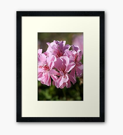 Geranium Pinks Framed Print