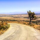Desert Road by Joe Lach
