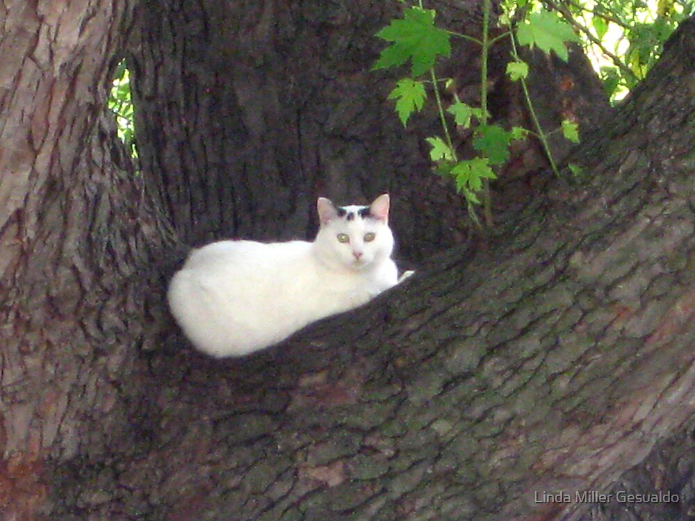 Cat In A Tree Called Snowball by Linda Miller Gesualdo