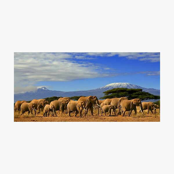 Kilimanjaro And Elephants Tanzania Kenya Africa  Photographic Print