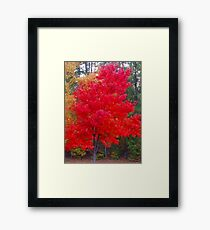 South Carolina Fall Glow Framed Print