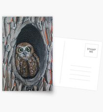 Owl Postcards