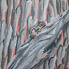 Chipmunk by Kim Donald