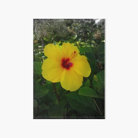 Yellow Gumamela Art Board Print