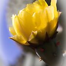 Cactus in Yellow by laxwings