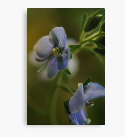 Twins (from wild flowers collection) Canvas Print