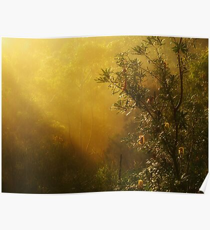 """""""Banksia in the Mist"""" Poster"""