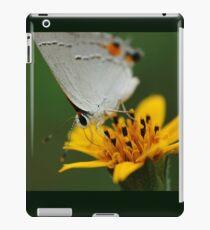 Hairstreak Butterfly Macro iPad Case/Skin