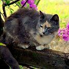 my kitty by Elizabeth Rodriguez