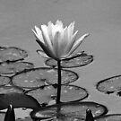 Journey of Peace by Terri~Lynn Bealle